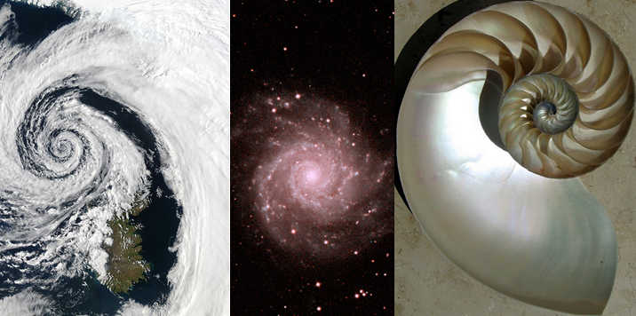 Real world examples of the Fibonacci spiral